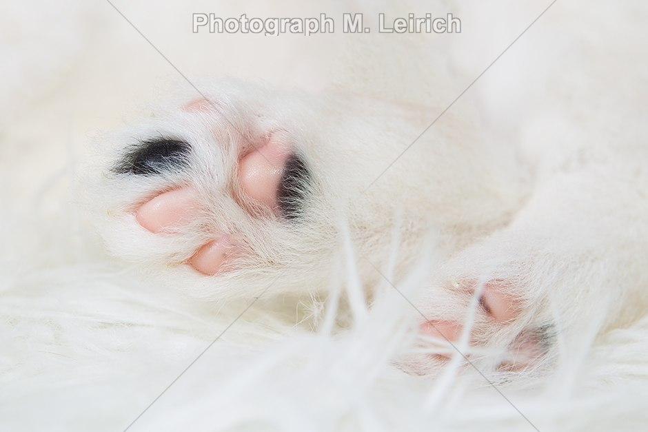 Pfötchen | Welpe 5 Wochen Rasse Klein Elo Pfötchen der Hinterhand