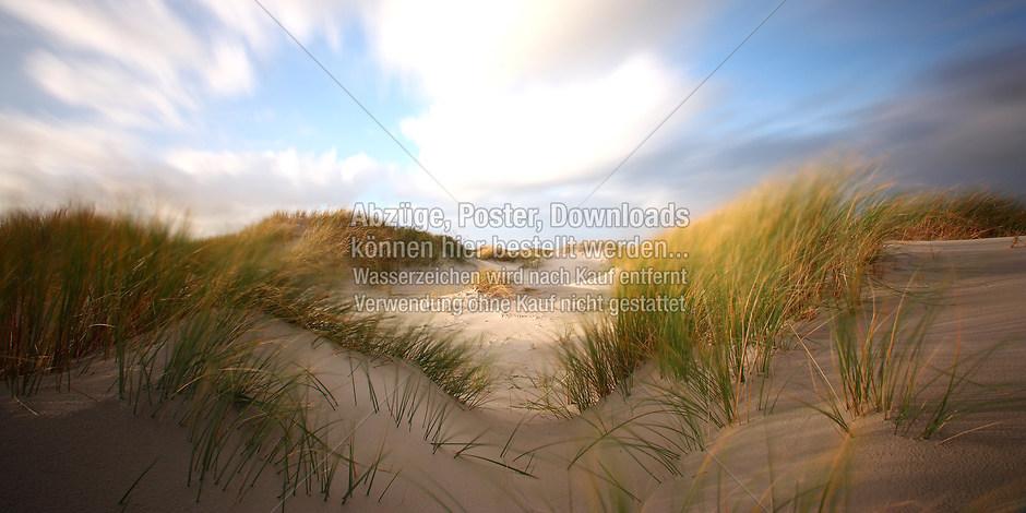 DÜNEN 8864 | föhr, amrum, wyk, nieblum, natur dünen, strand, fotografie, foto, bild, jens oschmann, fotograf