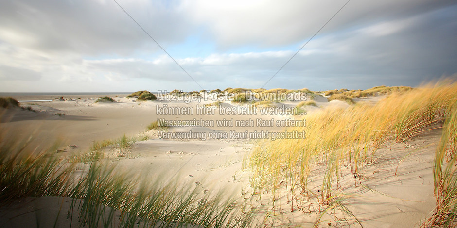 AMRUM 8867 | föhr, amrum, wyk, nieblum, natur dünen, strand, fotografie, foto, bild, jens oschmann, fotograf
