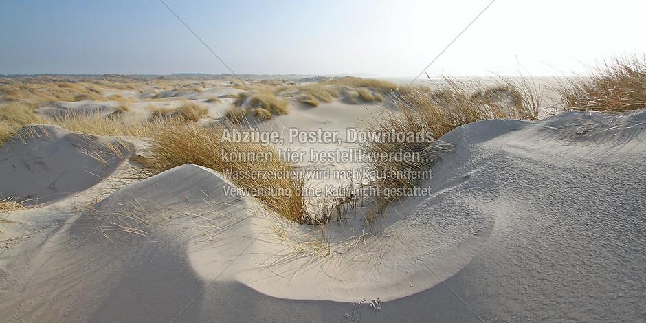 DÜNEN 9530 | föhr, amrum, wyk, nieblum, natur dünen, strand, fotografie, foto, bild, jens oschmann, fotograf