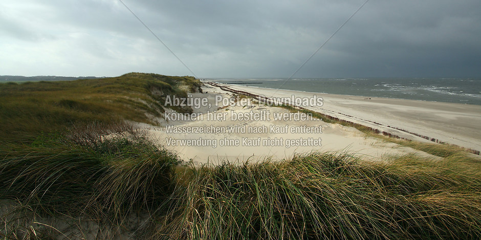 AMRUM 1295 | föhr, amrum, wyk, nieblum, natur dünen, strand, fotografie, foto, bild, jens oschmann, fotograf