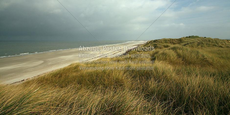 AMRUM 1297 | föhr, amrum, wyk, nieblum, natur dünen, strand, fotografie, foto, bild, jens oschmann, fotograf