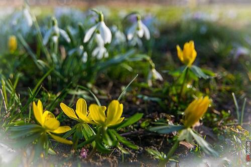 Frühling 2014_002_im Uebigauer Schlosspark