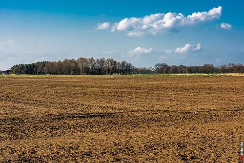 Frühling-Elster_20140326_16-27-36_002