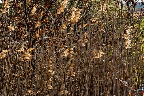 Frühling-Elster_20140326_16-44-24_005