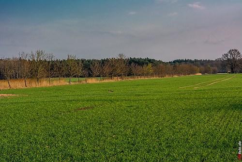 Frühling-Elster_20140326_17-18-40_019