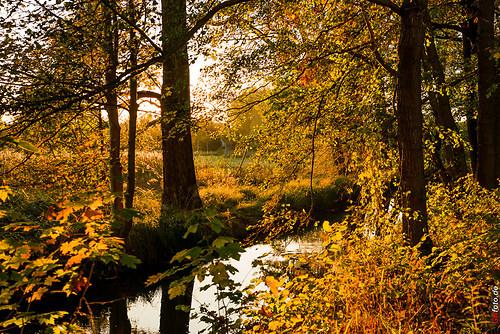 Herbst2014_Schlosspark_20141028_17-20-21_009