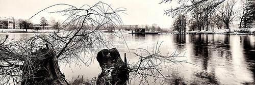 Der Aasee im Winter 2014/15