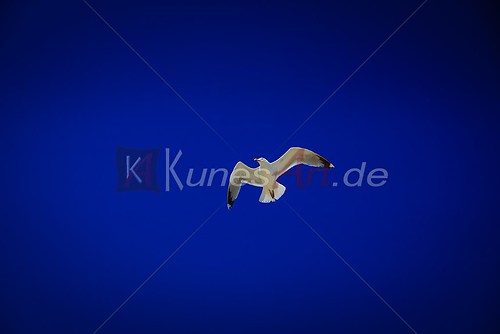 KunesART Galerie 016