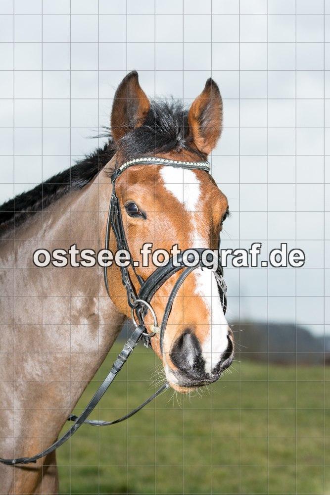 Reesdorf_ (76 von 84)