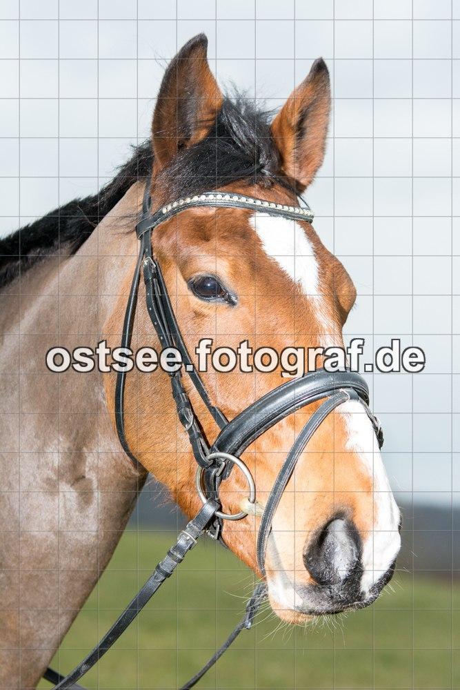 Reesdorf_ (78 von 84)