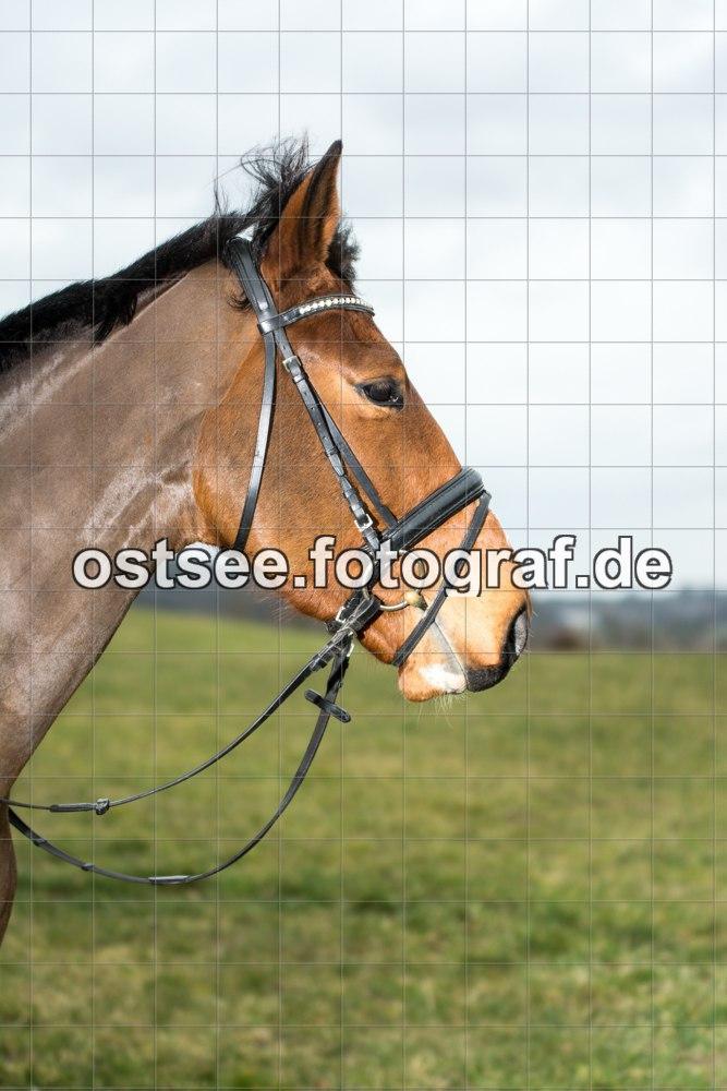 Reesdorf_ (80 von 84)