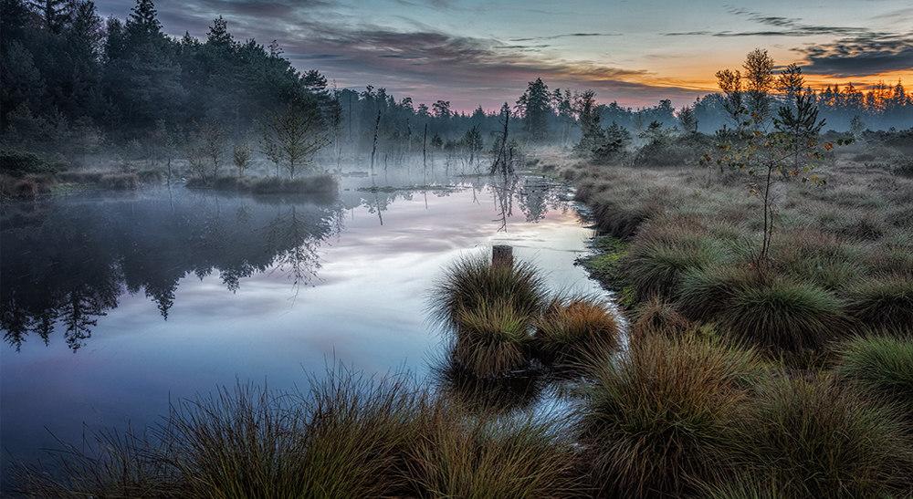 5 (Moor) |  Originalbild unter: http://manfredkarisch.getphoto.at/photo/54747235-1020-4dac-b43e-4d750a22c35e
