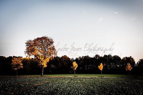Trelde - Herbstreihe