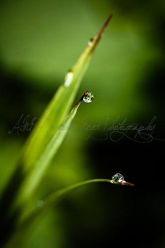 Grashalm im Regen