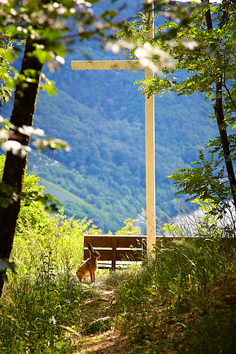 Der Hase am Horsten-Kreuz