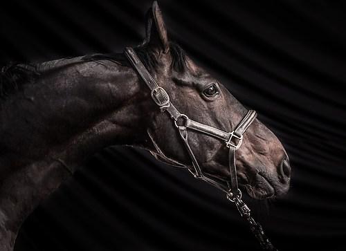 Pferdefotos Stall Hoove-6126Pferde