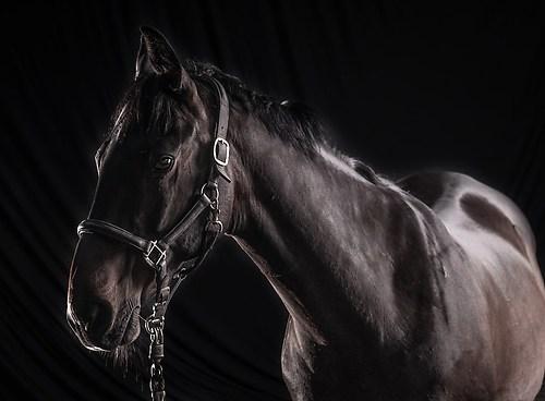 Pferdefotos Stall Hoove-6181Pferde