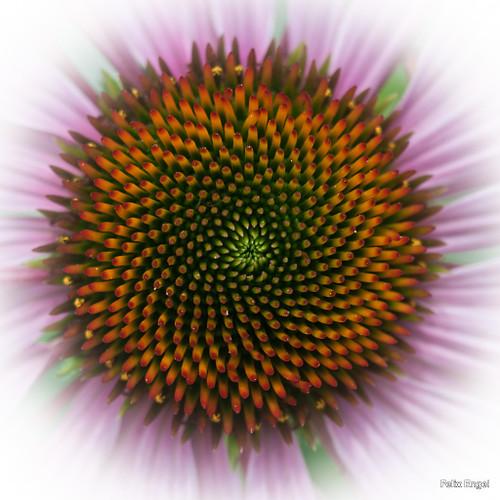 Blüte (diefotofabrik.de_0040)