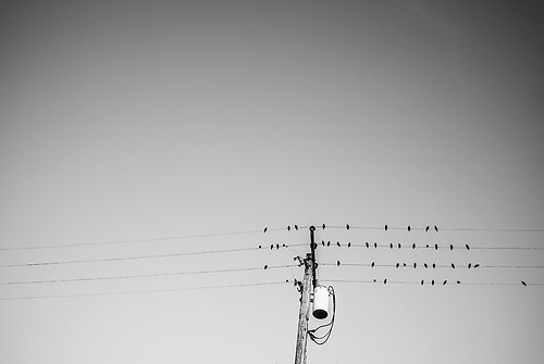 Birds on the Wire-fixed-1003746