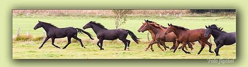 Pferde04