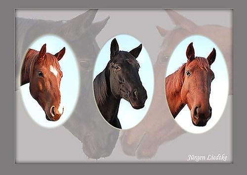 Pferde-Collage