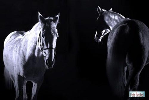 Pferdefoto-Fotostudio-Verden