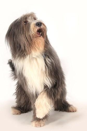 Hund0005