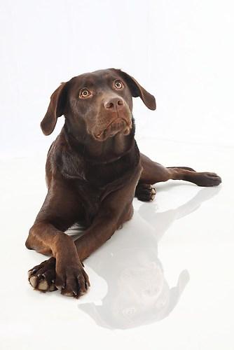 Hund0011
