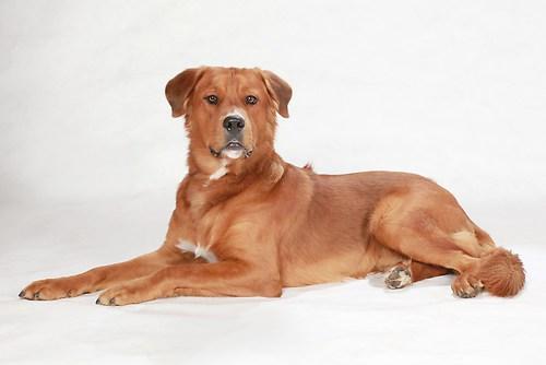 Hund0015