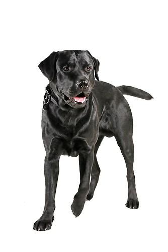 Hund0016