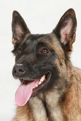 Hund0029