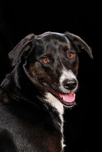 Hund0033