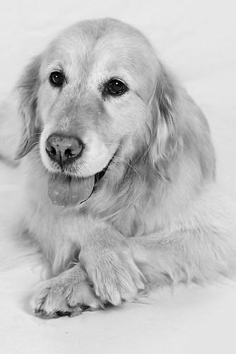 Hund0041