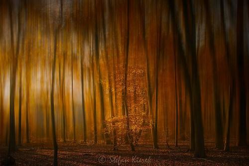 Herbstwald-2