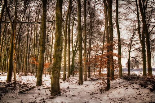 Boeckelter Wald...