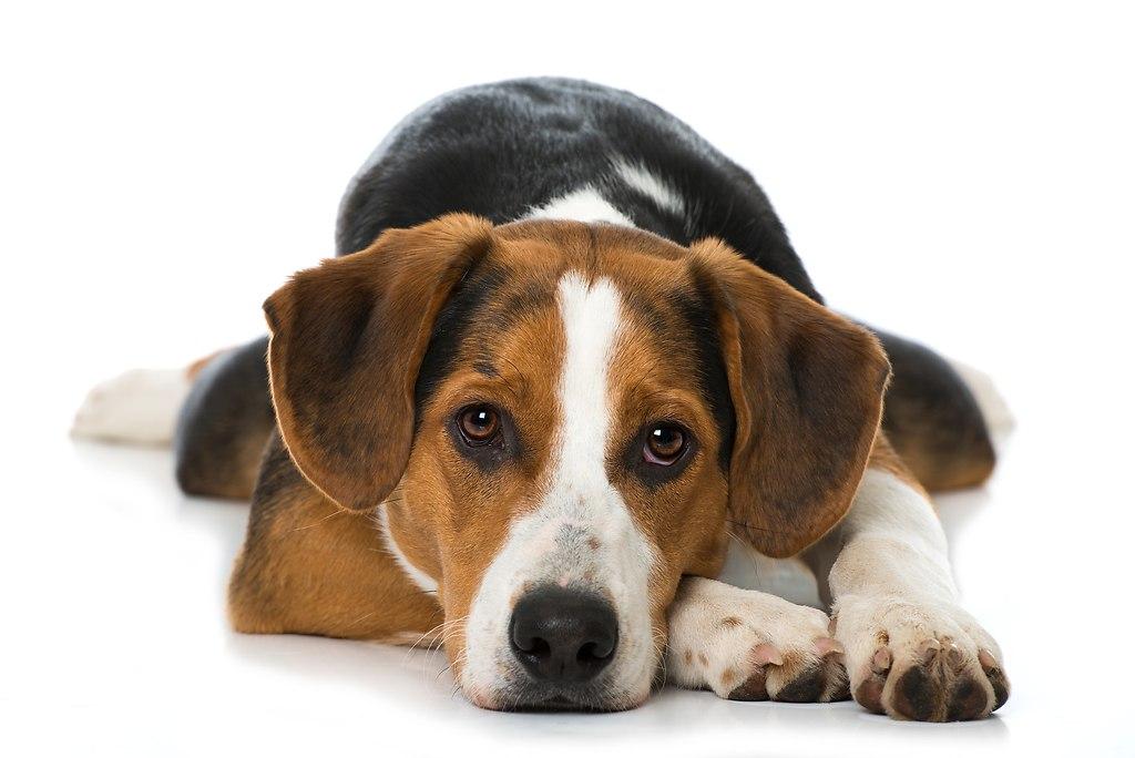Mischlingshund (_DSC9901a)