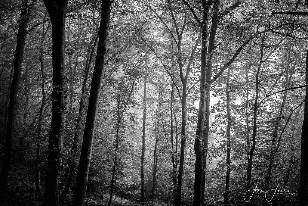 bilderleben-3 | arne.jansen.photography