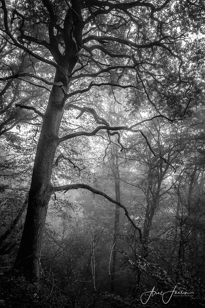 bilderleben-4 | arne.jansen.photography