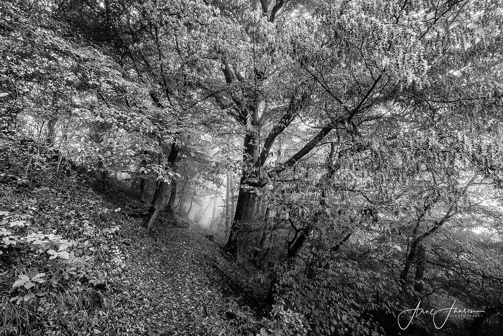 bilderleben-5 | arne.jansen.photography