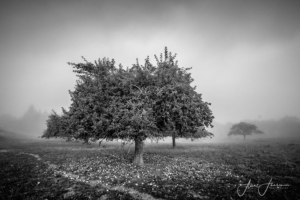 bilderleben-9 | arne.jansen.photography
