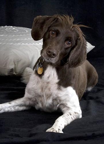 Trixi (Dog_03)