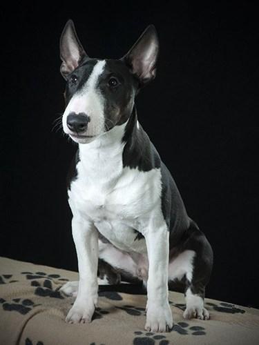 Dog_01