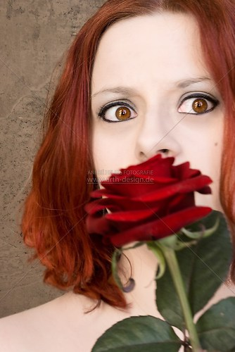 das Schweigen der Rose