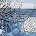 Starnberger See Winter (B101216_starnbergerseeIMG_2206) - 16.12.2011 - der gefrorene Starnberger See im Winter // Frozen lake Starnberger in bavaria in winter