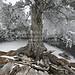 Herzogstand Walchensee (100214bmw42_IMG_5934) - 14.02.2010; mystischer Berg auf dem Herzogstand