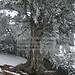 Herzogstand Walchensee (100214bmw42_IMG_5946) - 14.02.2010; mystischer Baum auf dem Herzogstand