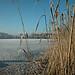 Wesslinger See Oberbayern im Winter (20090110_bmw42_DSCN0058) - Wesslingersee, Weßling, Ufer, Winter, Schilf, Natur, 10.01.2009, Winter, Blick auf Häuser des Ortes