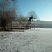 Wesslinger See Oberbayern im Winter (20090110_bmw42_DSCN0060) - Wesslingersee, Weßling, Ufer, Winter, Schilf, Natur, 10.01.2009, Winter, Blick auf Häuser des Ortes