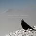 Herzogstand (B100214bmw42_IMG_5910) - Herzogstand am WalchenseeKampenwand Aschau im Chiemgau - Bergbahn von  Aschau zur Bergstation. Die dreigezackte Felskulisse der 1669 m hohen Kampenwand mit dem Chiemgaukreuz, dem größten Gipfelkreuz der Bayerischen Alpen ist auffallend und ein typisches Wahrzeichen der Region. Die Kampenwandseilbahn fährt auf knapp 1500 m Höhe. Von der Bergstation und der nahe gelegenen SonnenAlm eröffnet sich ein traumhafter Ausblick auf die Zentralalpen - Berchtesgadener Berge, das steinerne Meer, die Loferer Steinberge und in die Hohen Tauern kann man schauen. //